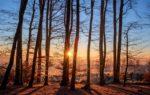 Brennholz kostenlos besorgen